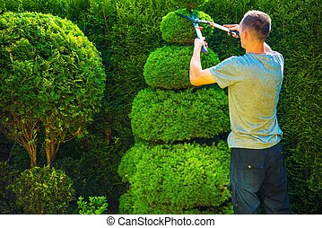 Topiary Trimming Plants. Male Gardener with Large Hedge...