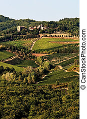 A vineyard hills at Chianti, Tuscany