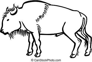 Bison Bull - vector line drawing a bull american bison