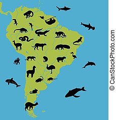 Animals on the map of South America and their habitats