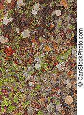 lichen moss in limestone rock texture in Spain