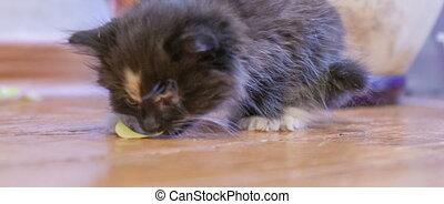 Little fluffy kitten Close-up