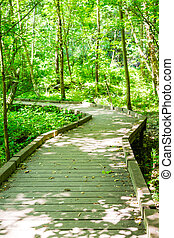 Wood Walkway Through Spring Forest - A wood plank walkway...