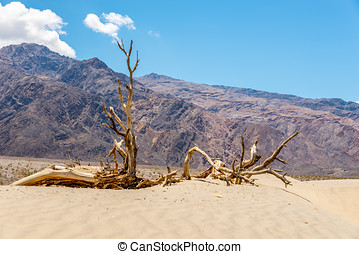 Dry Tree at the Sand Dune in Death Valley