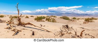 Dry trees at the Mesquite Flat - Sand dunes in Death Valley...