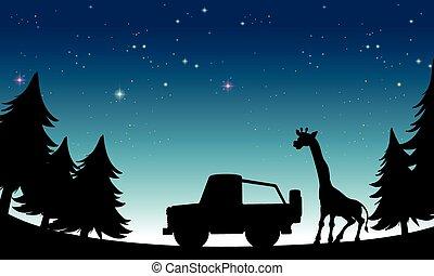 Silhouette safari