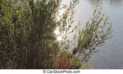 The play of sunlight in the branches of the grass