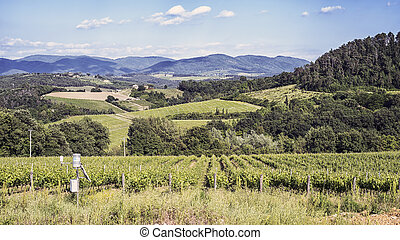 Vineyards of Chianti in Tuscany - Vineyards in spring on the...