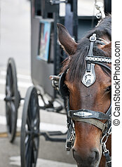 Closeup of horses head with carriage behind - A closeup of a...