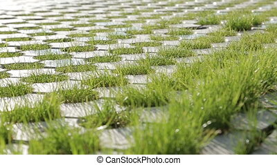 Grass between stones close-up Summer morning