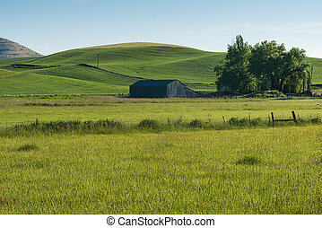 Barn and hills - Barn and rolling wheat fields, Steptoe,...