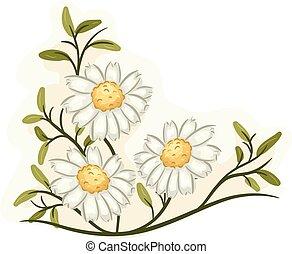 Chamomile - Illustration of a Bunch of Chamomile Flowers in...