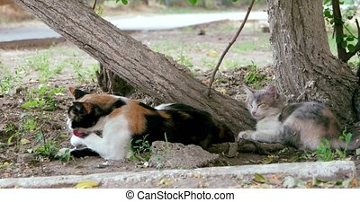Pride of feral cats resting