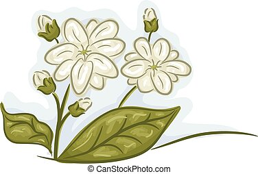 Jasmine - Illustration of a Bunch of Jasmine Flowers in Full...