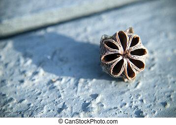 single tea tree seed - close up of a single tea tree seed on...