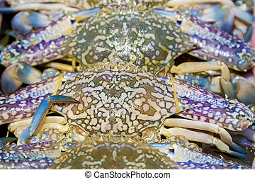 Blue crab, Blue swimmer crab, Blue manna crab seafood...