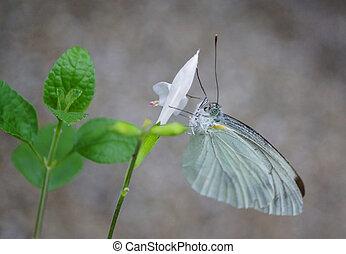 beautifu Butterfly on nature