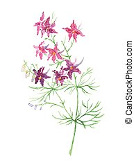 Small wild violet flowers. Watercolor floral illustration.