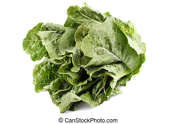 Romaine lettuce - Green and healthy romaine lettuce on a...