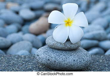 Spa and wellness. - White frangipani and therapy stones.