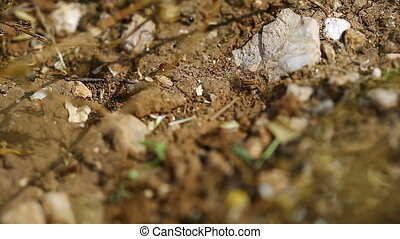 ants running around on the ground carry eggs
