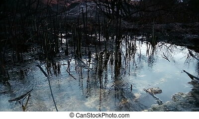 Pond with reflection