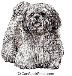 Lhasa Apso hand drawn - Image of Lhasa Apso hand drawn...