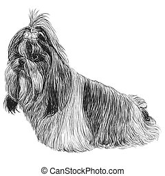 Shih Tzu hand drawn - Image of Shih Tzu hand drawn vector