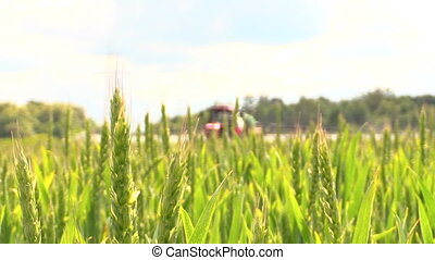 tractor spray wheat field - Wheat plants and agricultural...