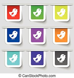 chicken, Bird icon sign. Set of multicolored modern labels...