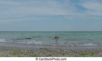 Dog out of the Water - Red Dog Coming out of the Sea on the...