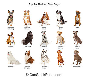 Collection of Popular Medium Size Dogs - A group of fifteen...
