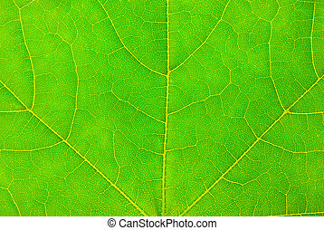 green leaf background - studio shot of green leaf texture