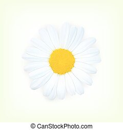 Chamomile - Background with chamomile. High quality vector....
