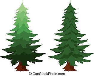 Two evergreen fir trees - Illustration of two evergreen fir...