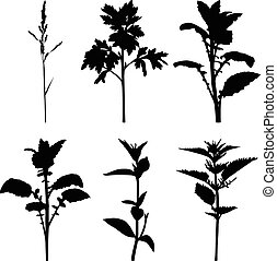 Set silhouette summer grass plants