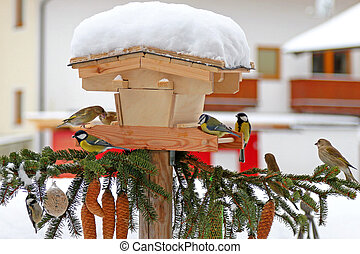 Colorful Passerine birds The tits eating sunflower seeds in...