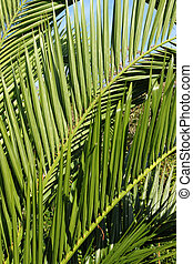 Spiky green leaves in a tropical garden.
