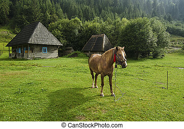 Bay horse grazes in the mountains - Bay horse with harness...