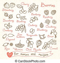 Set drawings of berries for design menus, recipes and...