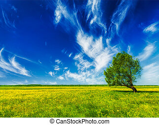 Spring summer green field scenery lanscape with single tree...