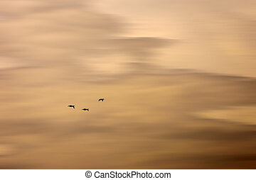 Fade sky - An abstract and blurred beige sky with three wild...