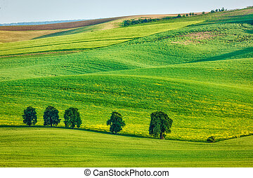 Rolling landscape of South Moravia with trees - Moravian...