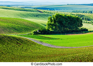 Moravian rolling landscape with trees. Moravia, Czech...
