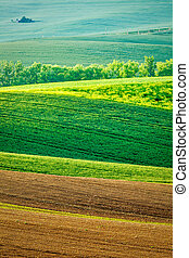 Moravian rolling landscape - European rural background -...