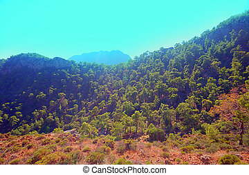 wild natural hillside and pine forest