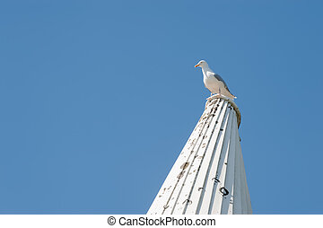 vantage point for a seagull on an oast house roof