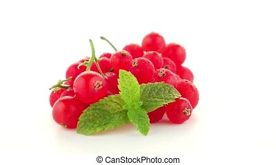 Red Currants close up on white background