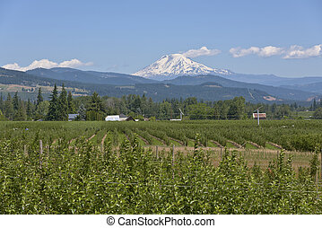 Mt Adams and Hood River valley Oregon - Mt Adams and the...