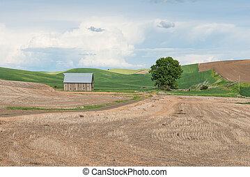 Farm - Barn, fields and lone tree near Steptoe, Washington